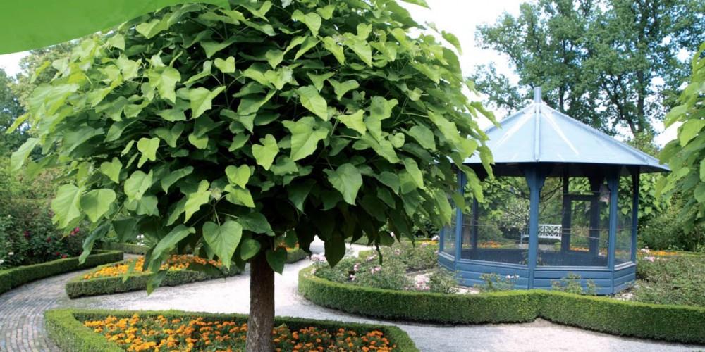 Stromy s kulovitou (kompaktní) korunou