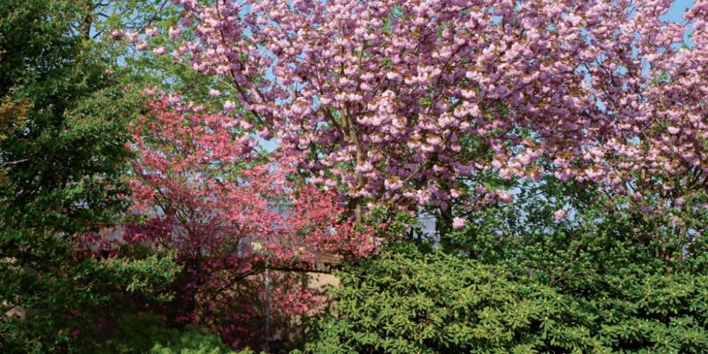 Jarní krása stromů