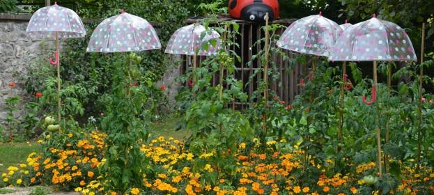 Prečo sú rajčinky pod dáždnikom?