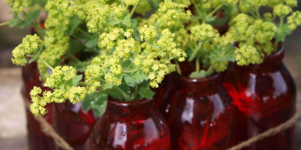 Kvetiny pre romantickú záhradu