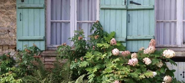 Trochu jiná hortenzie – hortenzie dubolistá