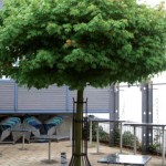 AcerStrom