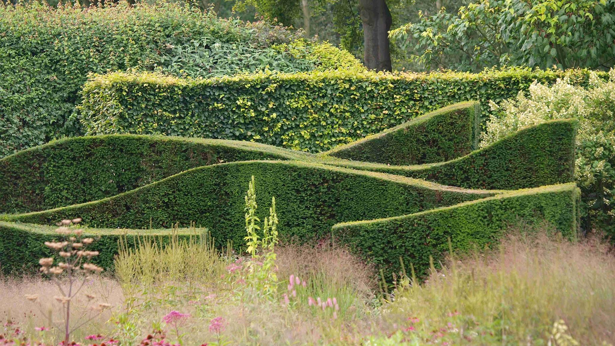 Vlnkatý živý plot z tisu - v pozadí rovný plot z buku.